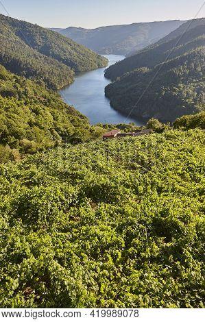 Ribeira Sacra Terrace Vineyards And Sil River. Galicia, Spain