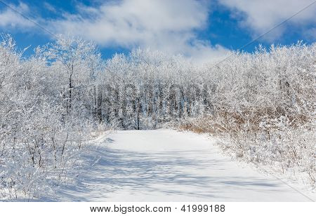 Snow Covered Road Leading Into The Woods