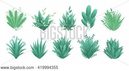 Greenery Branches. Green Realistic Spring Grasss. Leafs Of Exotic Plant Collection Of Tropical Abstr