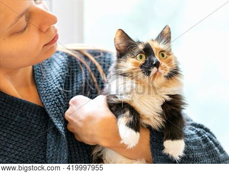 Young Woman Holding Charming Long-haired Three-color Orange-black-and-white Cat In Her Hands. Focus