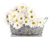 daisies in  wicker basket isolated on white poster
