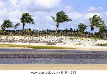 Brazil, Pititinga, Beach With Palms