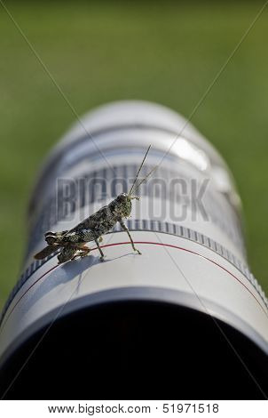 Grasshopper Helps During Photoshoot