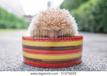 Hedgehog in a bowl in a park poster