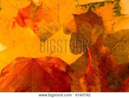 Atmosphere of autumn