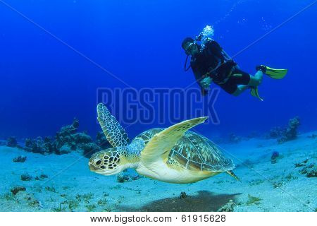 Green Sea Turtle and Scuba Diver