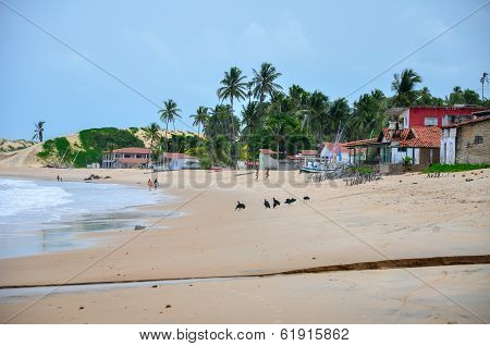 People Walking On The Beach, Pititinga, Natal (brazil)