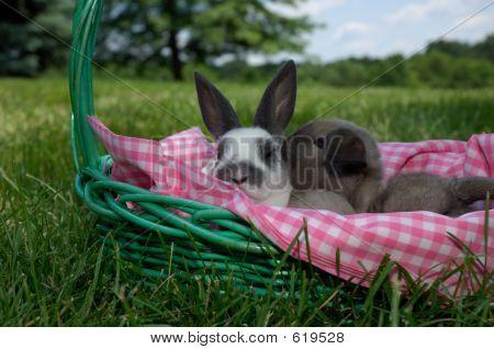 Easter Bunny Kiss