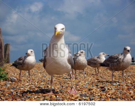 Coastal Gang