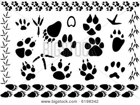Animal and bird footsteps vector illustration