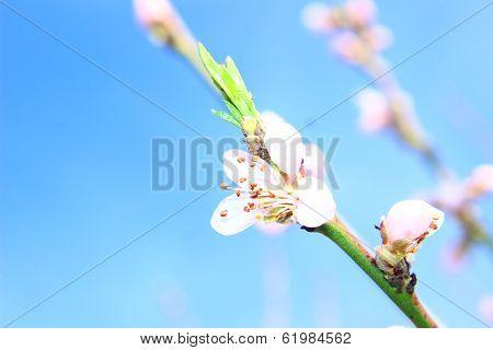 Beautiful Spring Bokeh