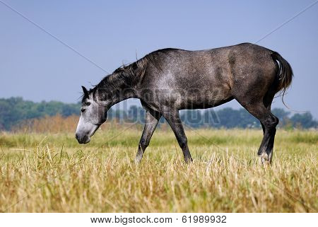 The horse on the field