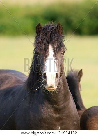 Black Pony Headshot