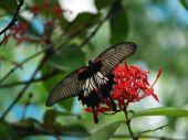 Exotic butterflies of Thailand, island Phuket 19 poster