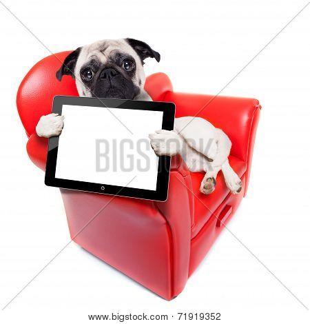Dog Sofa Computer