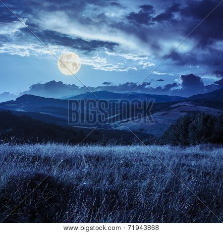 Trees Near Valley In Mountains  On Hillside At Night