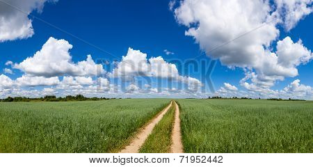 Panoramic view of summer field with green oats, dirt road and blue cloudy sky