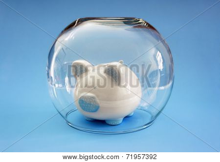 Protect your money, fish bowl covering a piggy bank concept for protecting your assets, financial help, insurance and investment