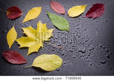 Few Wet Colored Leaves
