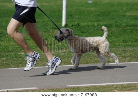 A jogger with a dog on a leash in the park