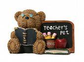 Teacher bear over white poster