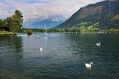 Swans on Zeller Lake, Zell am See, Austria poster