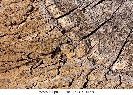 Bark And Wood Background