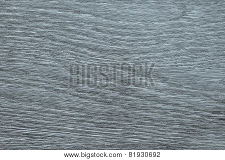 Longitudinal Section Tree Of Silvery Color