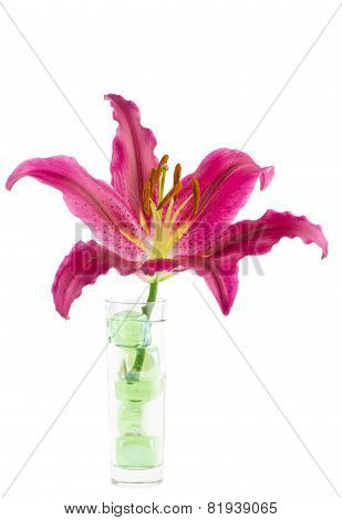 Magenta Lily In Glass Vase On White