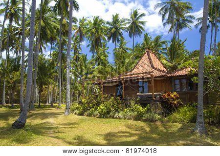 Beautiful Palm Trees .