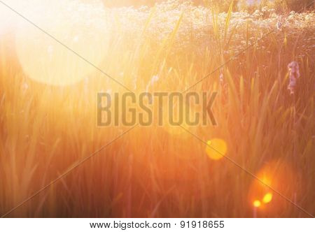 Grass in the wonderful sunset light with lense flares