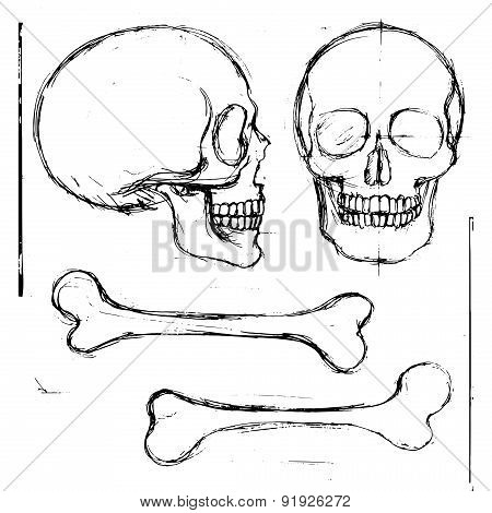 Hand Drawn Human Skull And Bones