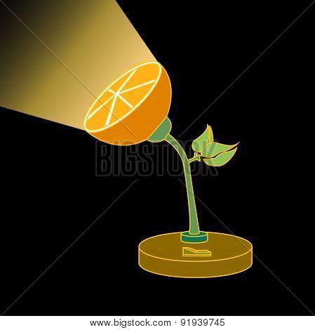 orange in the dark