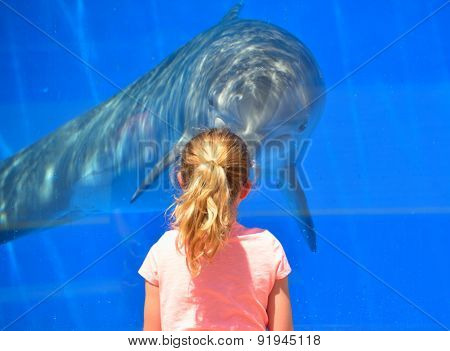 Child Interacting with Dolphin