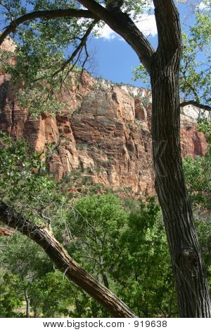 Cliff Face Framed By Tree, Zion National Park, Utah