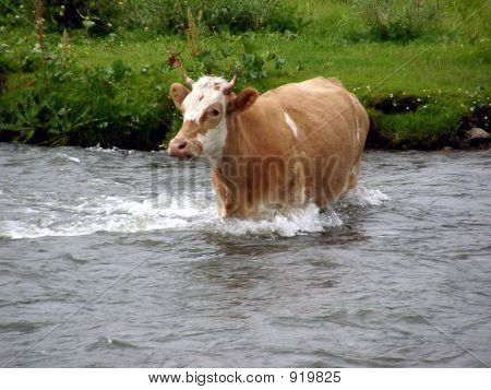 River Cow