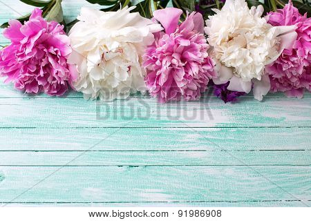 Background With Fresh Peonies Flowers