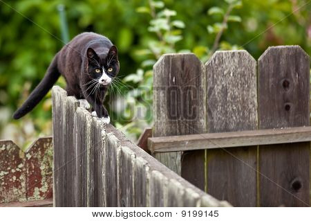 Cat is walking on a fence