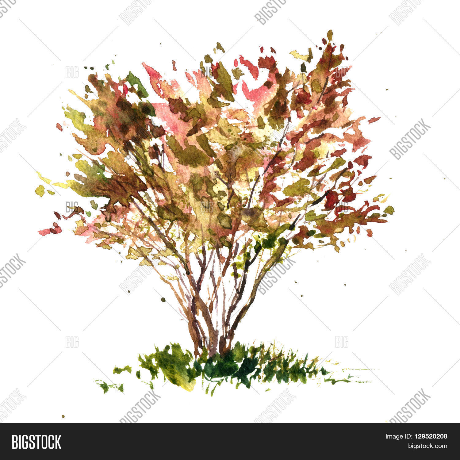 Cherry Blossom Tree Drawing By Image  for Tree Drawing With Watercolor  575lpg