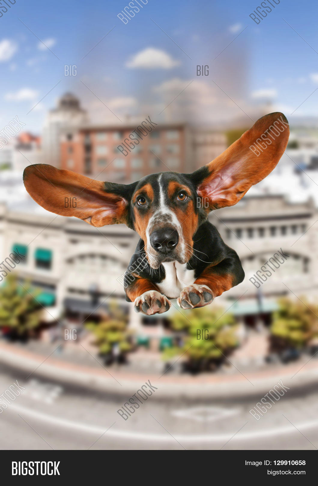 Basset Hound Giant Image & Photo (Free Trial) | Bigstock