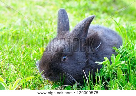 A little rabbit on green grass background ** Note: Visible grain at 100%, best at smaller sizes