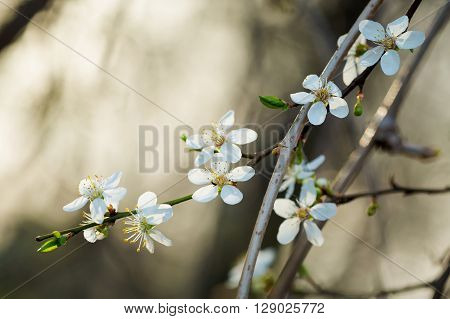 Macro photography of beautiful blooming springtime flowers - sign of spring season.
