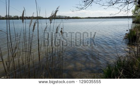 Overview of the pond from behind the reeds