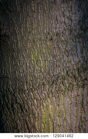 Texture of the tree bark in the sunset light, abstract background