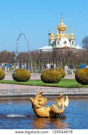PETERHOF, SAINT-PETERSBURG, RUSSIA - MAY 8, 2016: The Upper Garden. Fragment of The Mezheumniy (Indefinite) Fountain. On the background is The Palace Church of Saints Peter and Paul