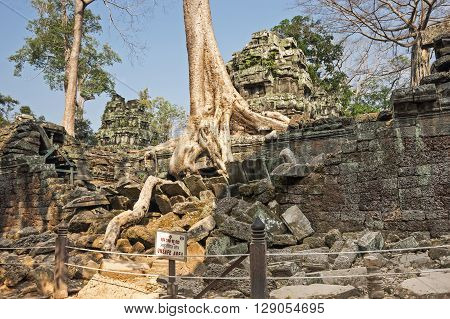 ANGKOR WAT, CAMBODIA - JANUARY 27, 2015: Tree roots growing through the ruins of Ta Prohm Temple at Angkor Wat in Cambodia