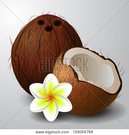 Coconut tropical nut fruit with cut vector illustration isolated white background with tropical flower plumeria
