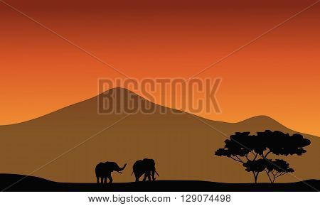 Silhouete of elephant in fields with mountain backgrounds