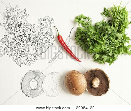 Artistic conceptual photo of red chili , parsley and mushrooms and it's mirrored sketch