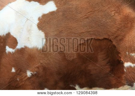 Brown fur carpet with cow skin pattern background